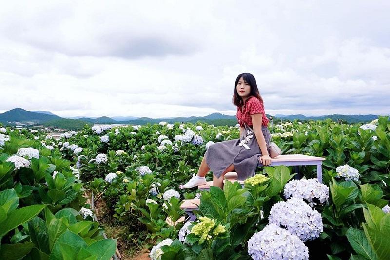 Vuon Hoa Cam Tu Cau Da Lat 1