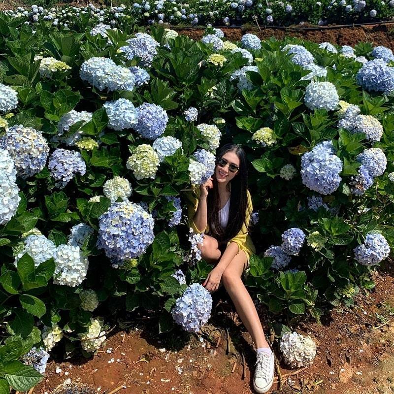 Vuon Hoa Cam Tu Cau Da Lat 9 Min 1
