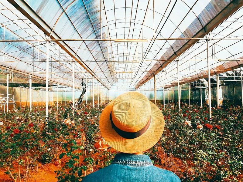 vườn hoa hồng Đà Lạt