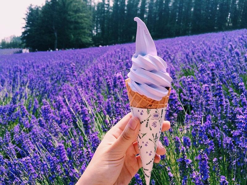 Từ A-Z kinh nghiệm đi vườn hoa Lavender Đà Lạt 2019: đường đi, giá vé,....  - Công viên quốc gia