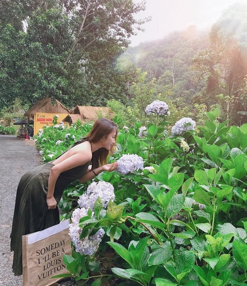 Hoa Son Dien Trang Da Lat 10