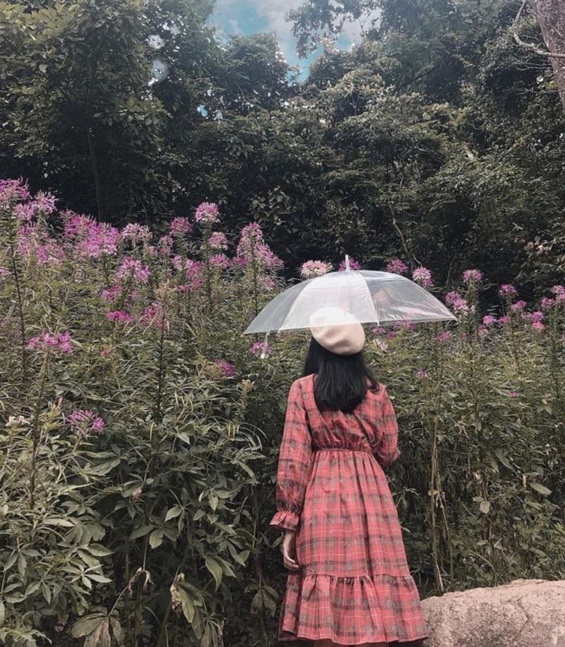 Hoa Son Dien Trang Da Lat 11