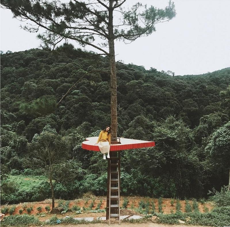 Hoa Son Dien Trang